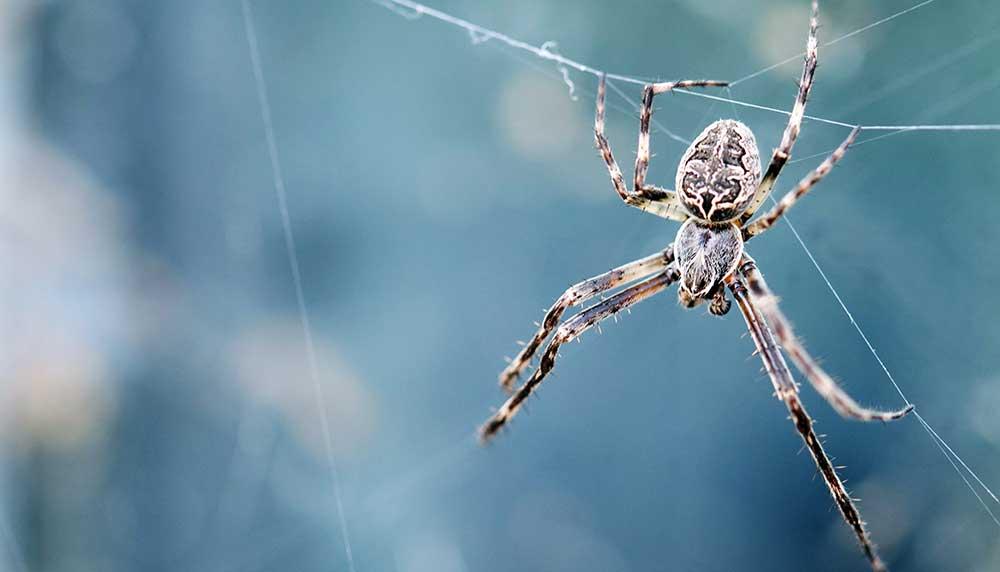 Omdat jij niet altijd in de buurt bent om de kamer vrij van spinnen te maken voor je vriendin, tippen we je deze spinnenvanger.