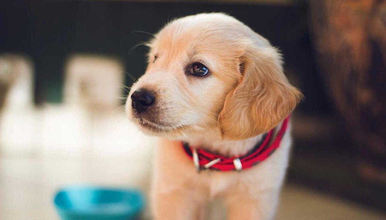 Kantoorhond vermindert stress