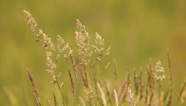 doekjes tegen hooikoorts en pollen