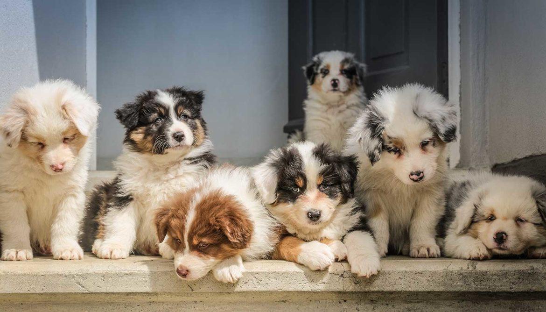 puppy's knuffelen