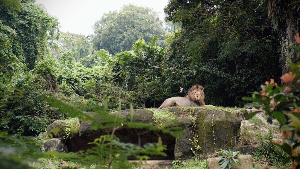 Singapore dierentuin