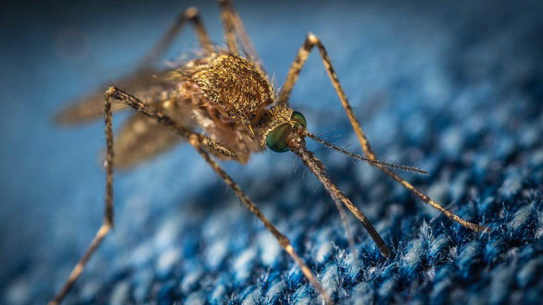 Eten waardoor muggen je niet steken