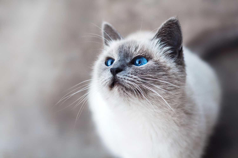 kattenallergie verhelpen