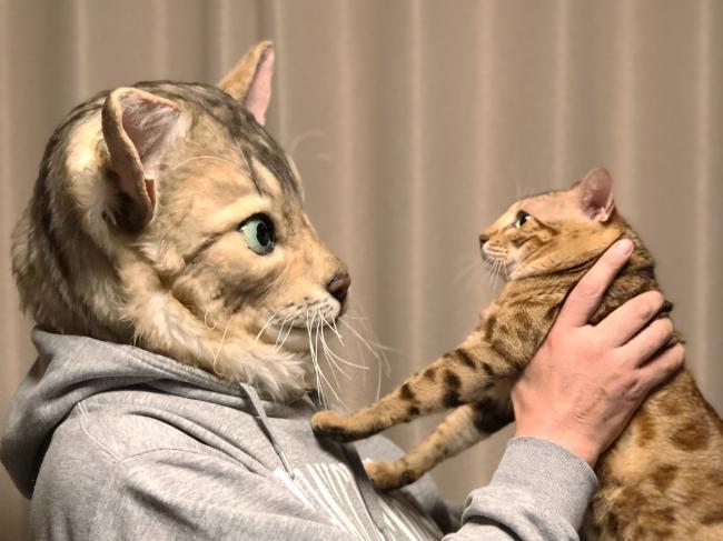 Kattenmaskers