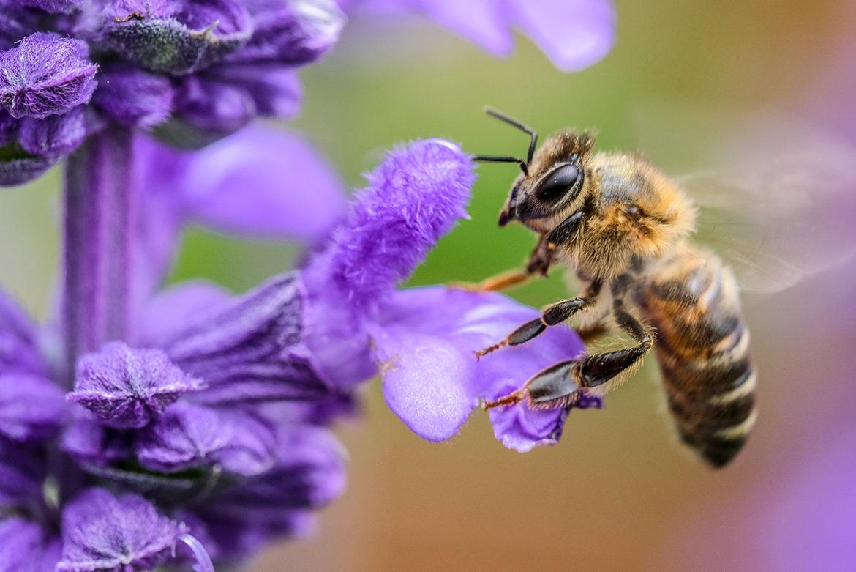 Sekspraat helpt ouder met bloemetjes en de bijtjes