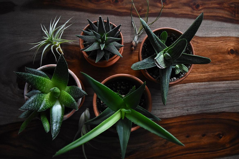 Plantentherapie