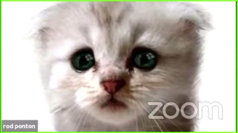Hoe kan je videobellen als een kat?