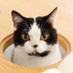 eettafel waarbij je kat kan aanschuiven