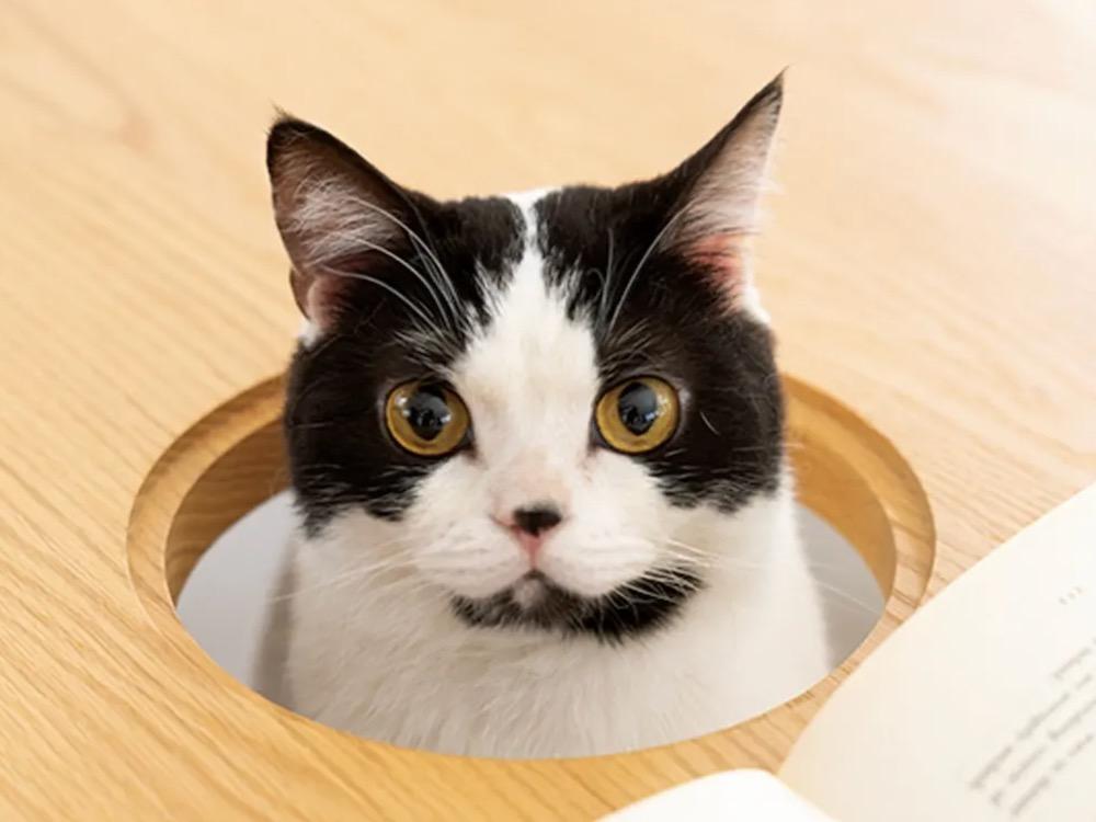 Eettafel Dinos voor katten of poezen